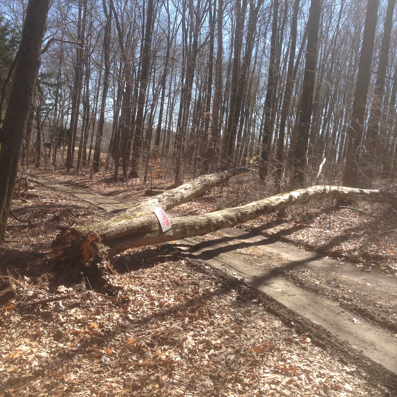 TREE DOWN !